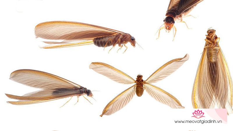 5 cách diệt gọn kiến cánh, mối cánh bay vào nhà