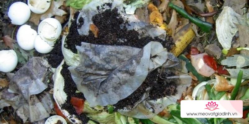 7 tác dụng của bã trà túi lọc trong việc làm vườn