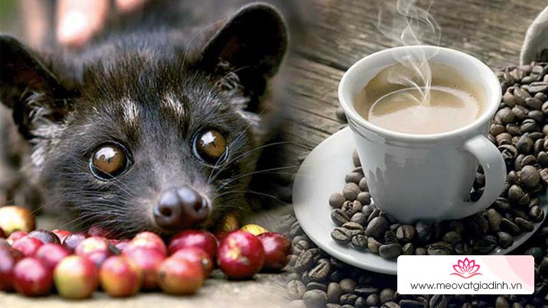 Cà phê chồn là gì? Cách pha cà phê chồn thơm ngon đúng điệu