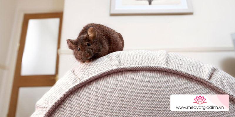 Cách bẫy chuột hiệu quả bằng keo dính chuột
