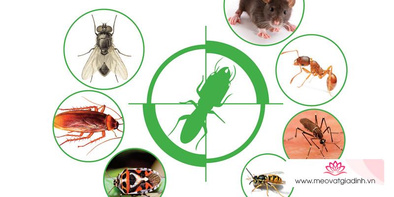 Cách chọn sáp thơm để tủ quần áo lưu hương đuổi côn trùng
