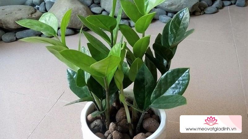 Cảnh báo loại cây cảnh nhà nào cũng trồng có thể gây ngộ độc