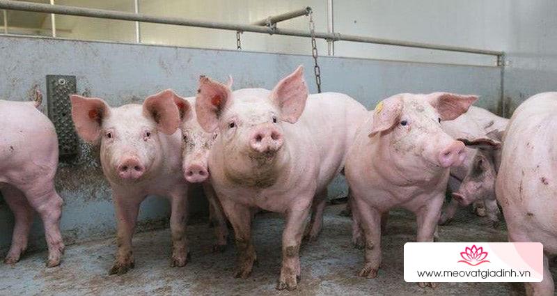 Giá thịt bò ngày 15/11: Tăng nhưng không đáng kể