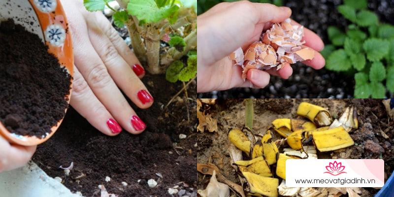 Mẹo trồng rau tại nhà xanh tốt không cần phân bón