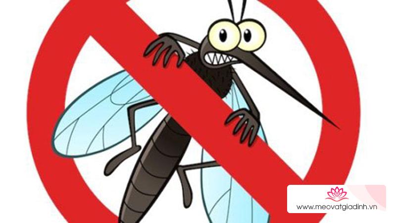 Phương pháp đuổi muỗi hiệu quả với chanh và hoa đinh hương