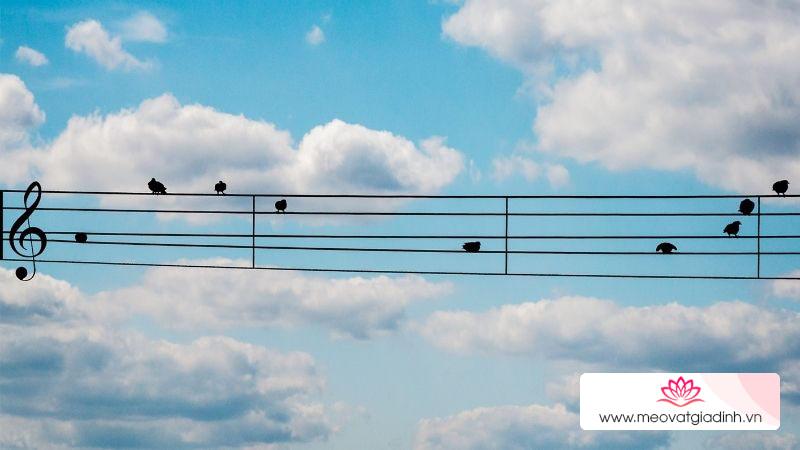Tuyển tập những bài nhạc nền, nhạc beat hay nhẹ nhàng, sâu lắng để thư giãn