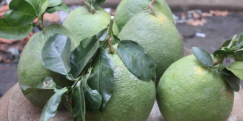 Bí quyết giữ trái cây tươi lâu trong ngày Tết