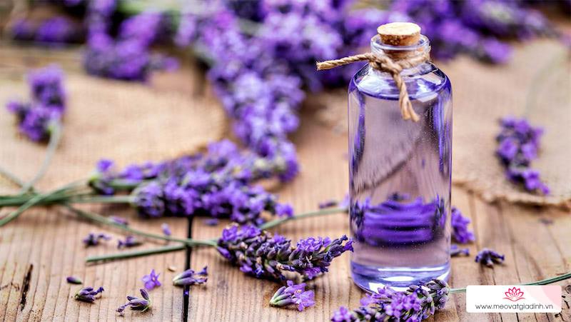 7 tác dụng của tinh dầu hoa oải hương và các lưu ý khi dùng