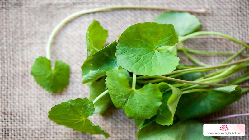 8 Tác dụng của cây rau má, các bài thuốc và lưu ý khi ăn loại rau này