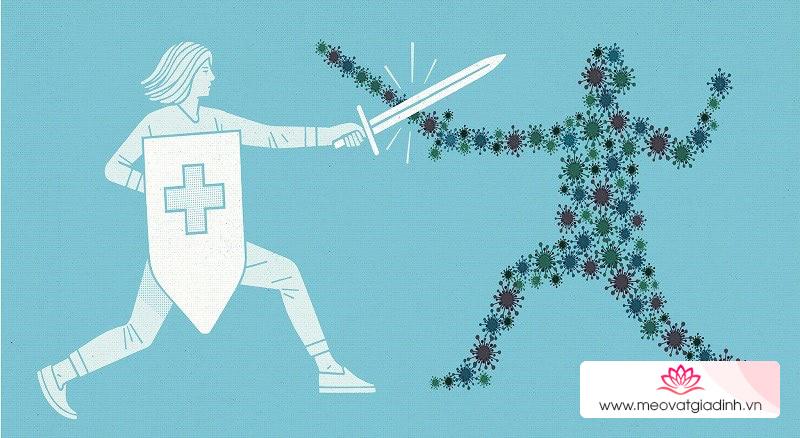 hàu giúp tăng cường sức khỏe hệ miễn dịch