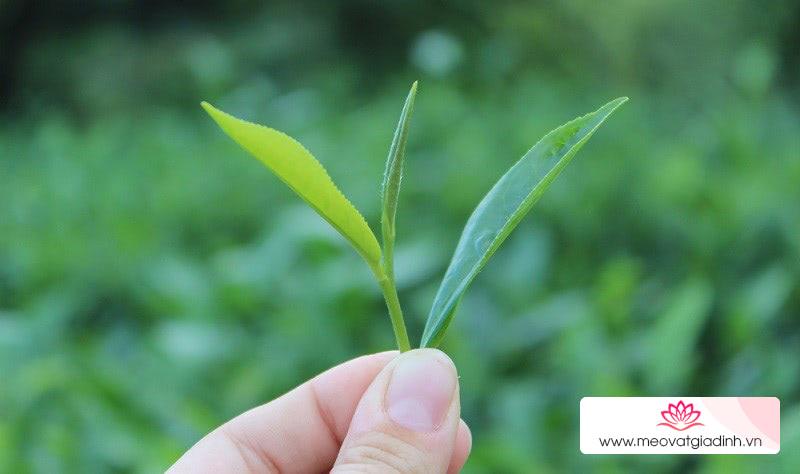 Định nghĩa trà xanh